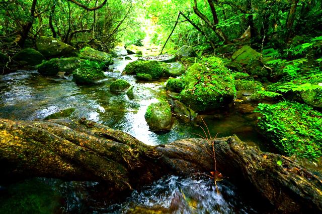 森林浴の効果がストレスをやわらげる理由