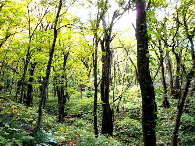 自然散策/森林浴