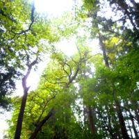 森林浴が慢性的なストレスから解放し、心と身体を癒す