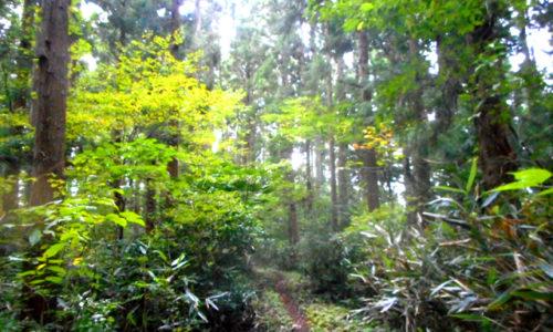 森林浴のリラックス効果を高めるコツ