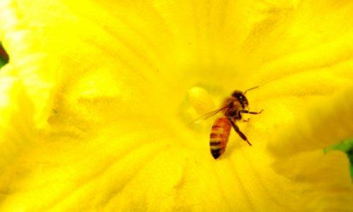 蜂蜜の糖質(ブドウ糖・果糖)はエネルギーになりやすい。