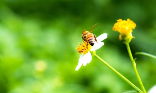 3月8日は「ミツバチの日」2019。
