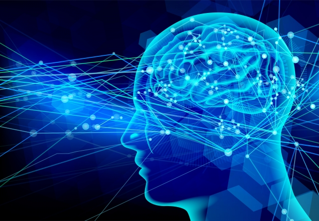 脳における神経可塑性