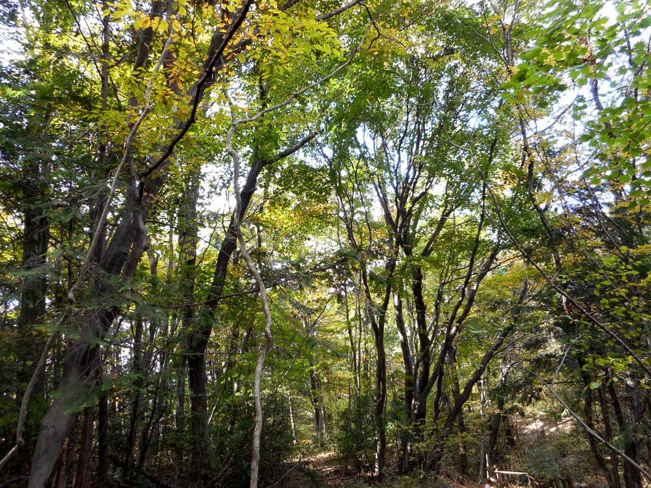 マインドフルネス×森林浴&アーシングの記憶 in 青葉の森