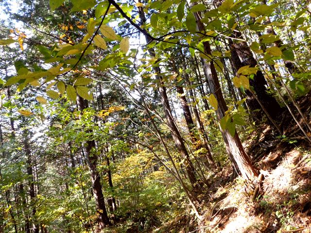 コルチゾールの放出量が減る森林浴のストレス解消効果