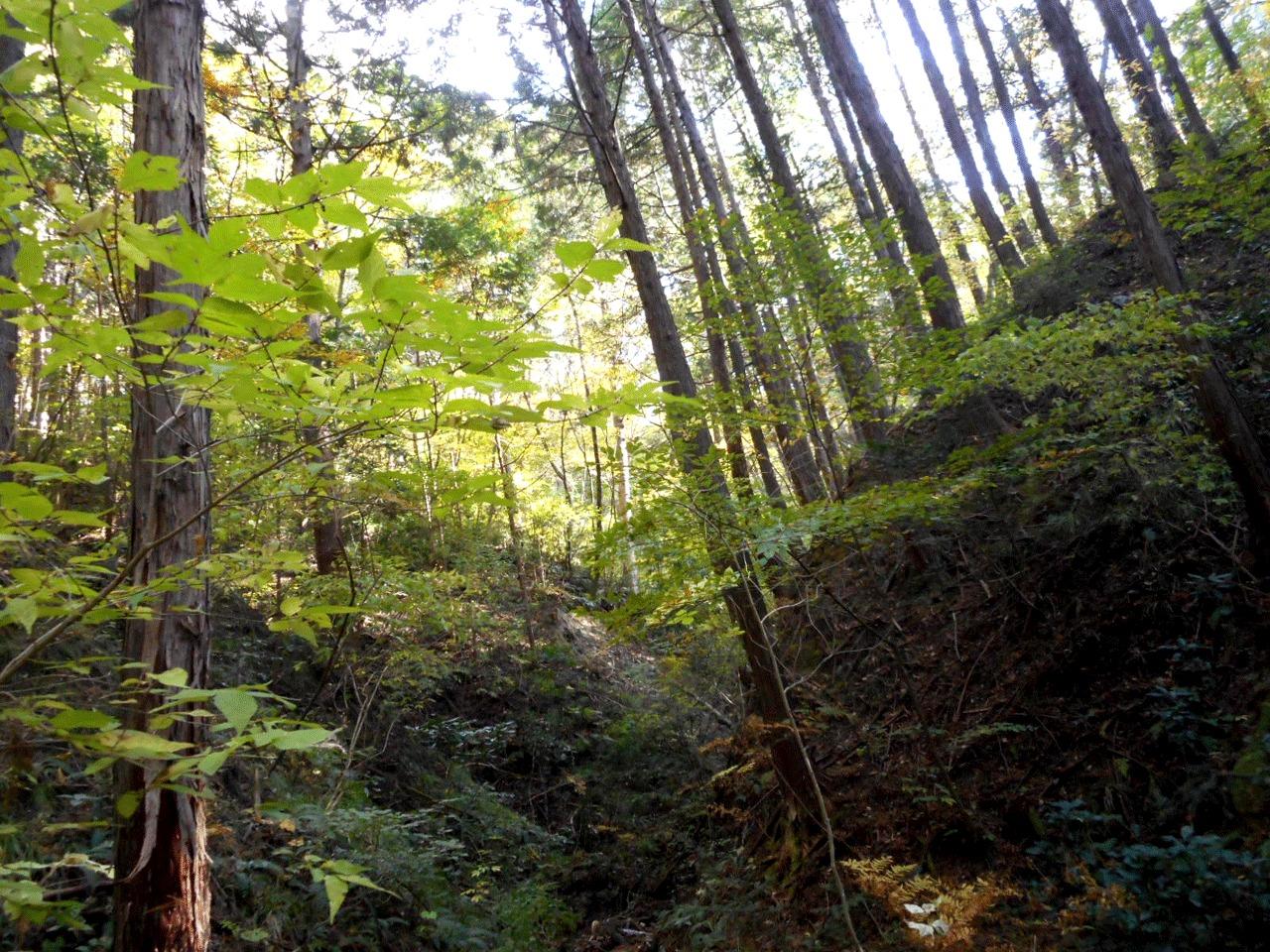 森のなかにしばらくたたずむだけで、普段の心のざわざわが落ち着いていきます。