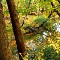 森林浴が慢性的なストレスから解放して心と身体を癒す。