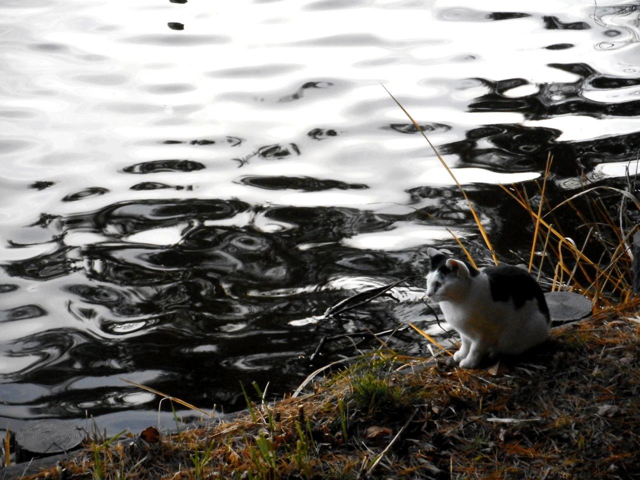 与兵衛沼で出会った猫