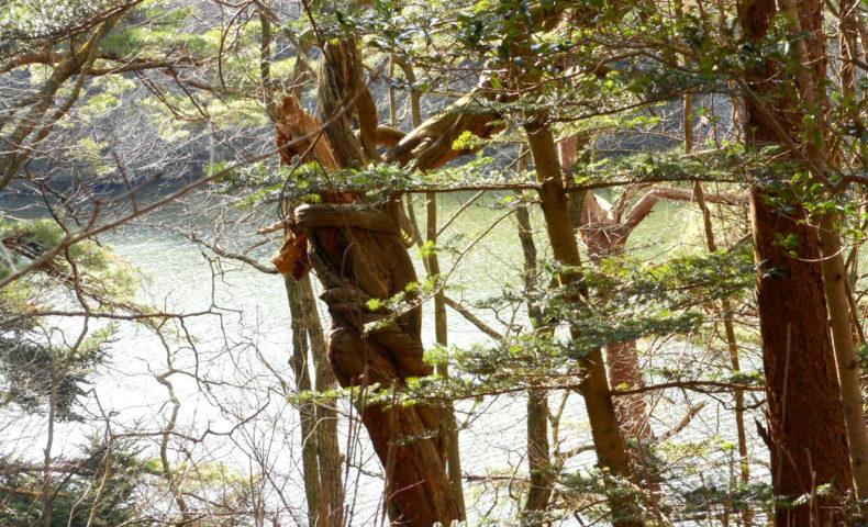 森林浴の免疫力を高める効果とは?