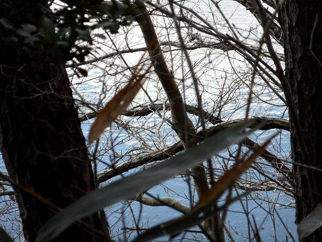 孤独がつらいと感じた時に森林浴×マインドフルネスを行ってみることは、ひどい孤独感を解消するための手段