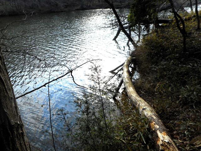 孤独がつらいと感じる時こそ、森林浴×マインドフルネスをセルフケアのために実践してみるのが効果的