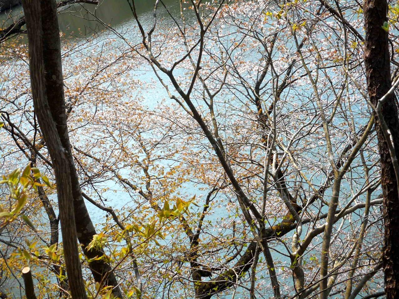 春の森林浴×マインドフルネスの感覚