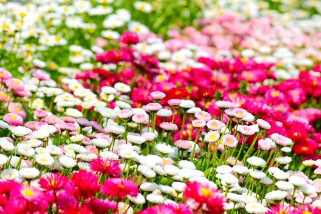 お花畑になぞらえて「腸内フローラ」と呼ばれている腸内細菌叢。