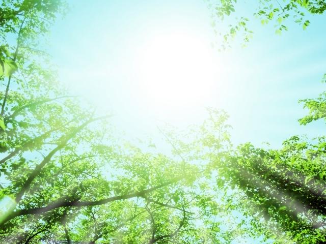 日光浴もアトピー改善のためには大切。