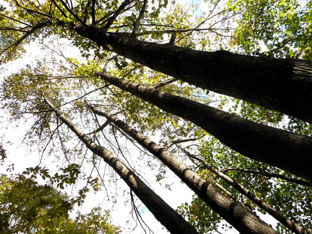 森林浴を定期的に行うことで、免疫力やストレス耐性が高まることは十分考えられる