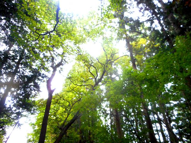 森林浴を行っている間は、マインドフルネス瞑想を実践しているつもりで、自然そのもの=今の瞬間を五感で感じることに集中