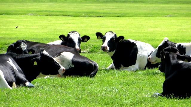 「グラスフェッドバター」とは、ノンストレスな牛から絞った乳で作られたバターのこと