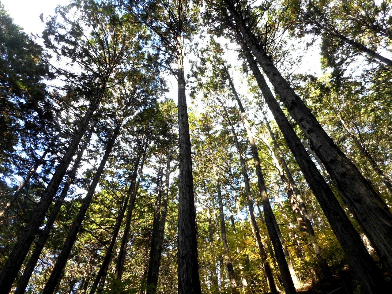 毎日マルチタスク状態が続くと、何となくメンタルがイライラ/そわそわしてきますが、森のなかにしばらくたたずむだけで、普段の心のざわざわが落ち着いていきます。
