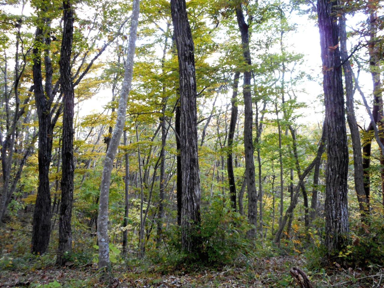 最後は休憩所の近くで、しばらくマインドフルネス×森林浴×アーシング。