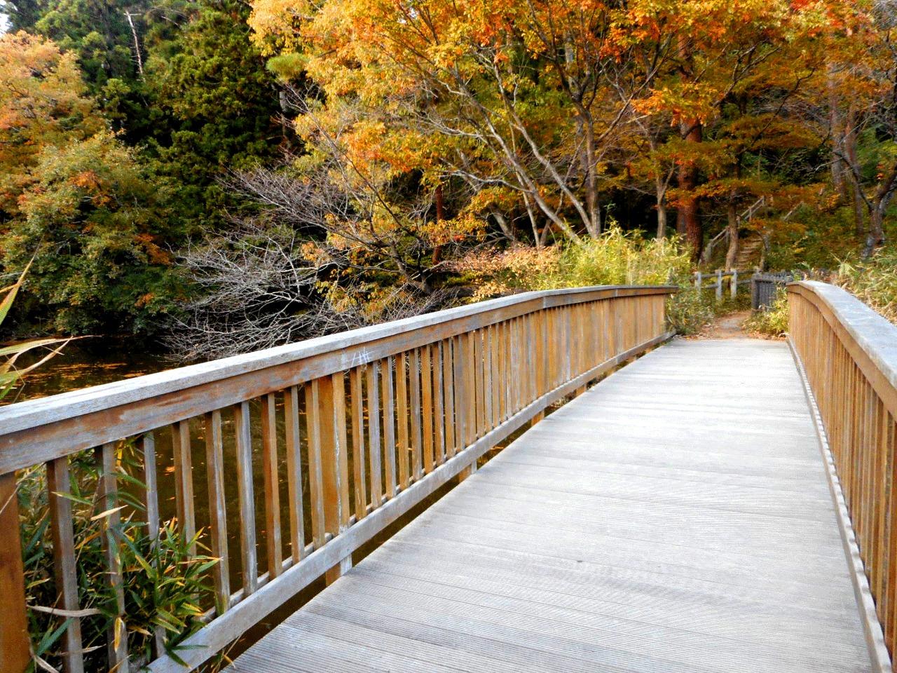 こちらは、マインドフルネスや歩行瞑想に最適な場所。