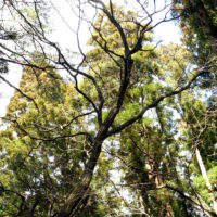 なぜ森林浴×マインドフルネス効果がストレスによる慢性炎症・生活習慣病を防ぐのか?