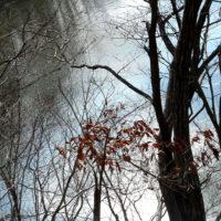 マインドフルネス×森林浴の瞬間(とき)の記憶。