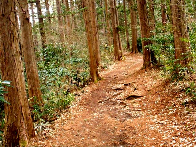 自然のなかをぶらぶらと歩く森林浴を実践するだけでも、日ごろのストレスは減っていく
