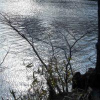 【孤独】な時こそ、森林浴×マインドフルネスでセルフケア習慣。