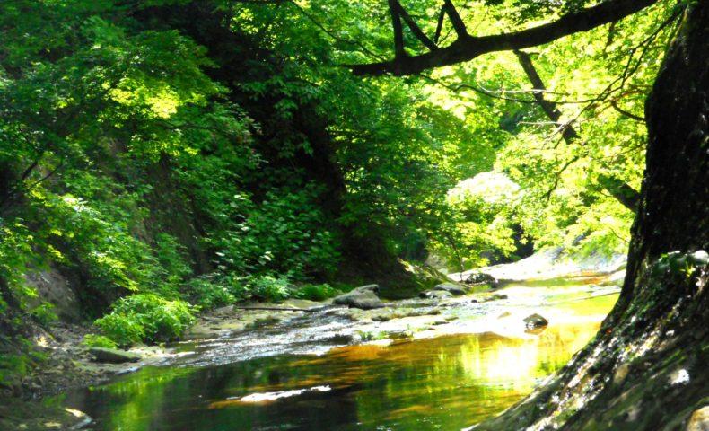 なぜ森林浴×マインドフルネスがストレスによる慢性炎症・生活習慣病を防ぐのか?