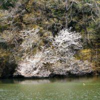 春の森林浴×マインドフルネスの感覚。