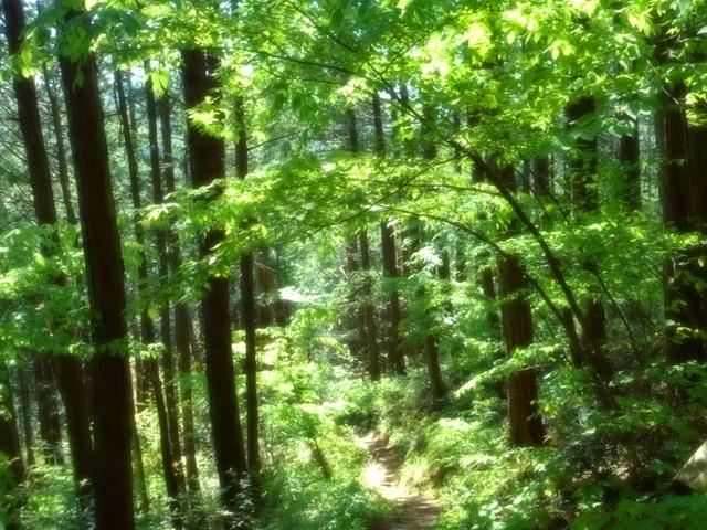 森林浴×マインドフルネスは肥満・コロナ太りの解消にもオススメ。