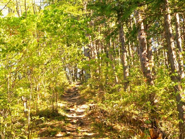 森林浴×マインドフルネスならば、ストレスの低減と運動不足の解消を同時に行える