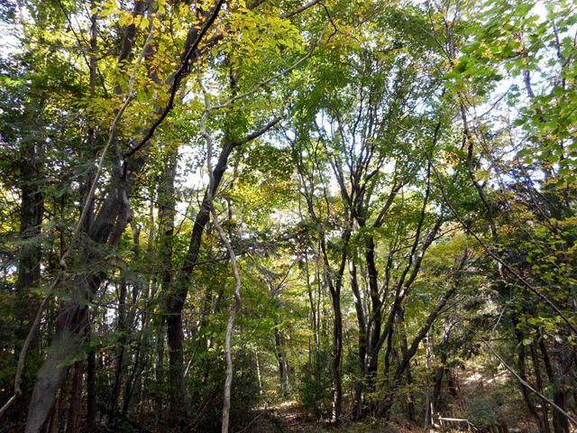 森林浴×アーシングで、土に触れる生き方・腸活を実践【腸を元気にする生き方】