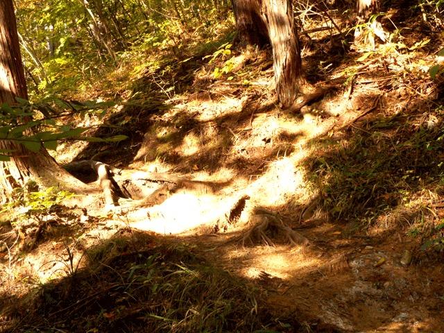 森林浴+「アーシング」で実際に土に触れる。